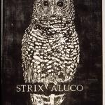 BIRDS.Strix Aluco