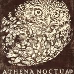 BIRDS. Athena Noctua
